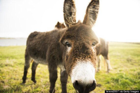 Roswell Driver Wakes Up In A Field Of Donkeys After Going Missing In Infamous UFO