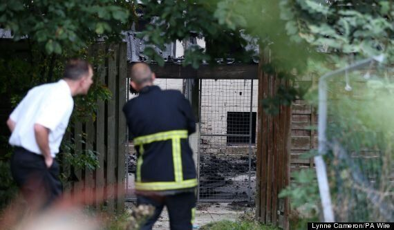 Fire Kills More Than 20 Dogs In Another Horrific
