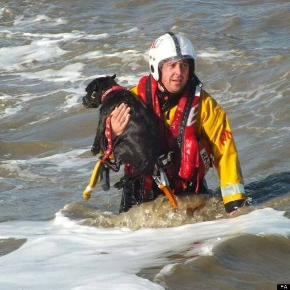 Terrier Archie Rescued By RNLI After Plunging Off Essex