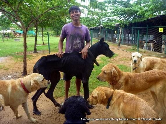 'The Voice of Stray Dogs' Subjected to