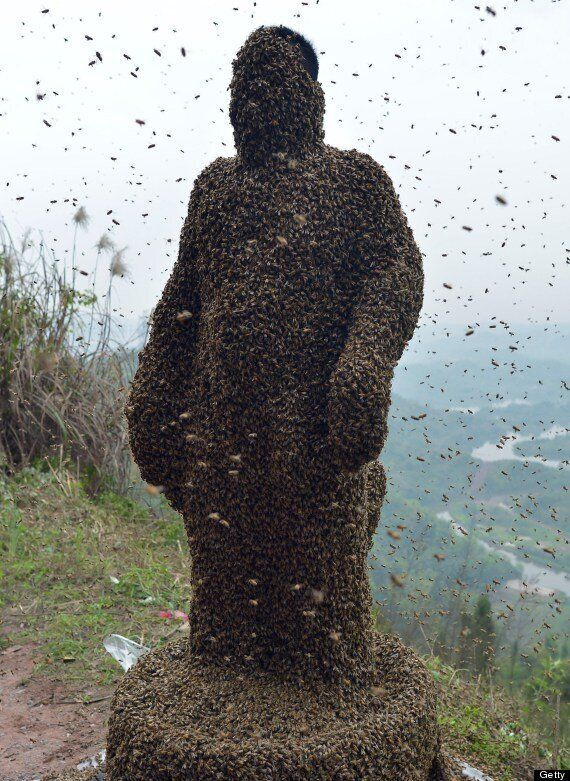 Beekeeper Promotes Honey Business By Wearing 45kg Live 'Bee Dress'
