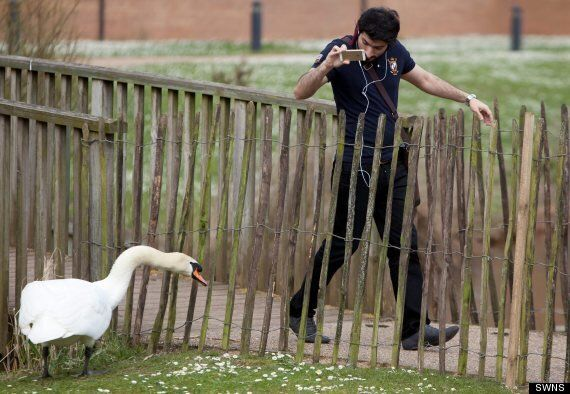 'Racist' Swan Attacks Foreign Students At Warwick