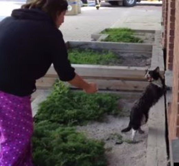 Watch Sylvester The Cat's Incredible Escape From This Burning, Collapsing