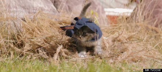 'Assassin's Kittens' Is 'Assassin's Creed'.... With