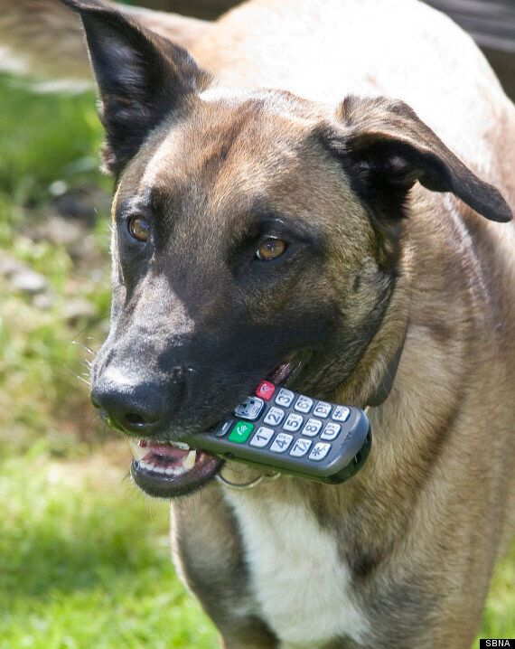 'Naughty' Dog Summons Police After Dialling 999 & Breathing Heavily Down The Phone