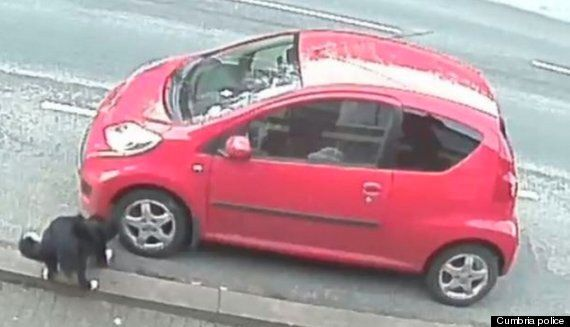 Cumbrian 'Vandal' Behind Spate Of Tyre-Slashing Is Actually A Dog Called Jessie