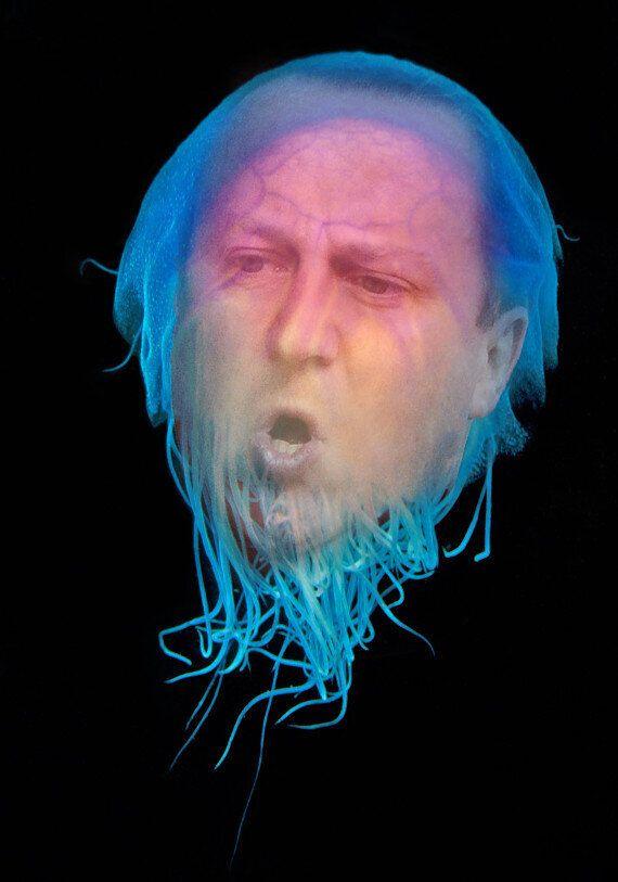 David Cameron Stung By Jellyfish, Twitter Reacts Gleefully