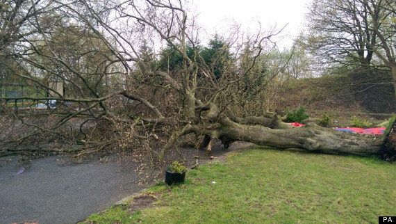 Falling Tree Injures Four People Near Pub In