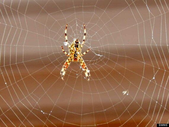 Giant Spider Web Blocks Pensioner's Garage In