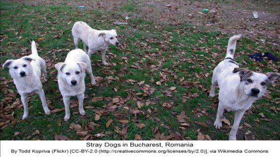 Justice for Romanian Stray