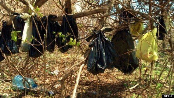 30 Dead Cats Found Hanging From New York Tree In 'Ritualistic Display'
