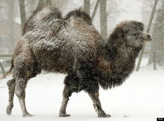 Frozen Fur: Animals Romp Through The Snow