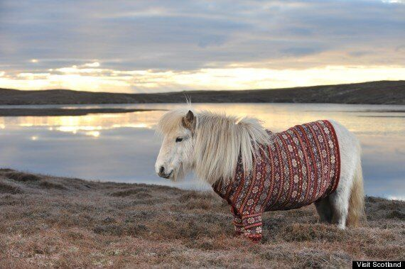 Shetland Ponies In Cardigans. You're Welcome.