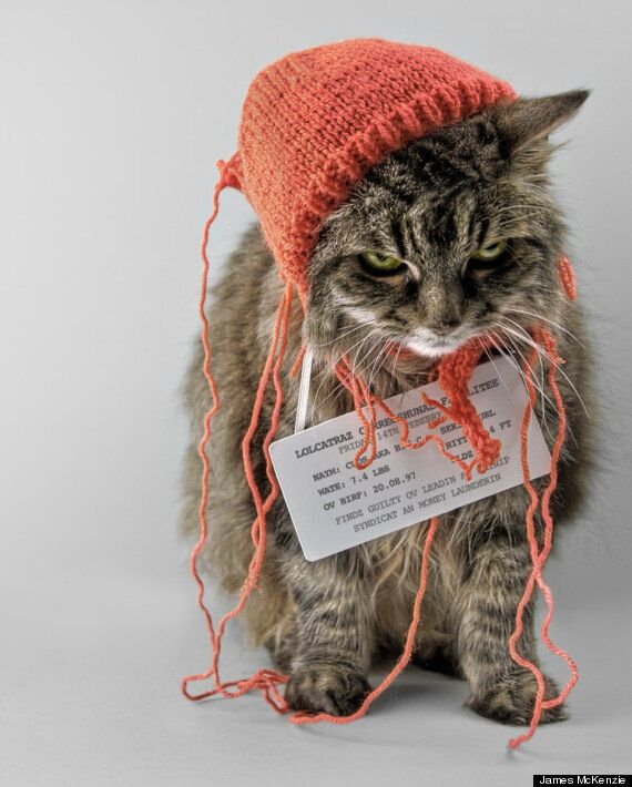 New Exhibition Of Original LOLCATS Raises Money For Charity: Enjoy