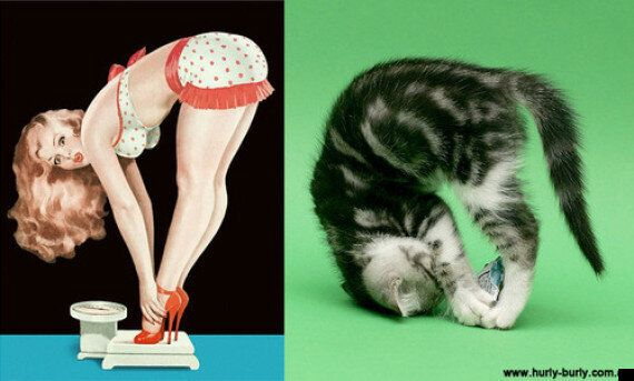 Cats That Look Like Pin-Up Girls: LOLcats Get Sexy