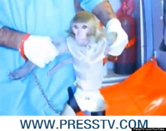 Iran Launches Monkey Into Space In 'Pioneer' Capsule Says State
