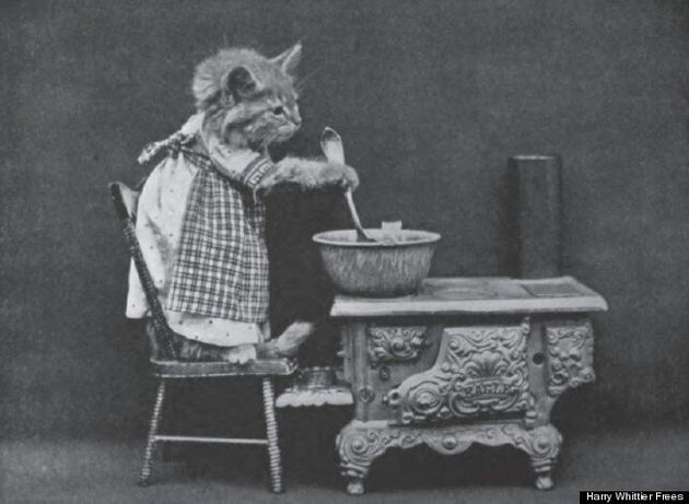 LOLcats: Pictures By Harry Whittier Frees Show Felines Subject Of Fun Even 100 Years