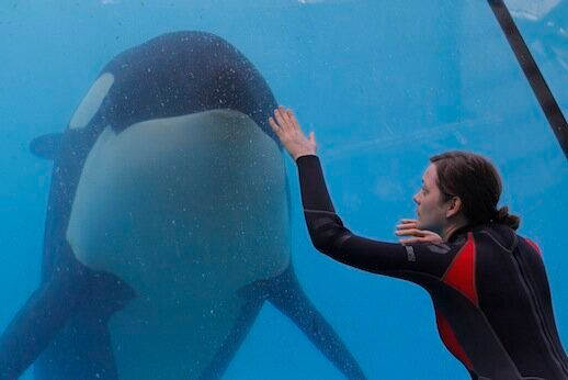 Hidden Depths: Jacques Audiard's Rust and Bone on