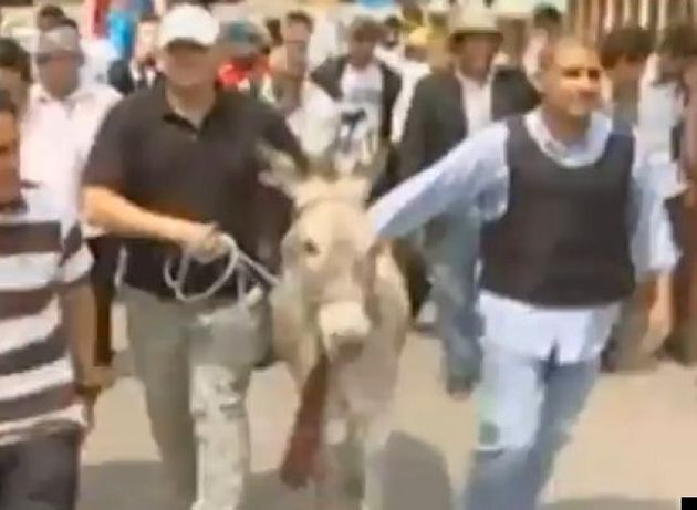 Ecuadorians Try But Fail To Enter Donkey As Election Candidate