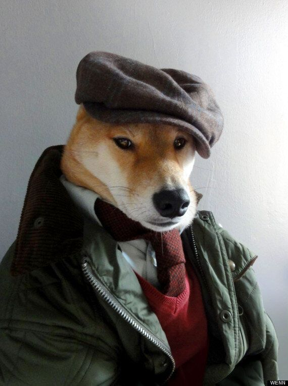 Menswear Dog Bodhi: Shiba Inu Wants You To Look As Stylish As He Does