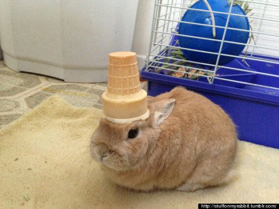 Stuff On My Rabbit Tumblr Is Our New Favourite Thing On The Internet