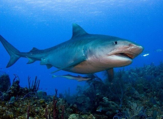 Marine Conservation Calendar Showcases Stunning Images Of
