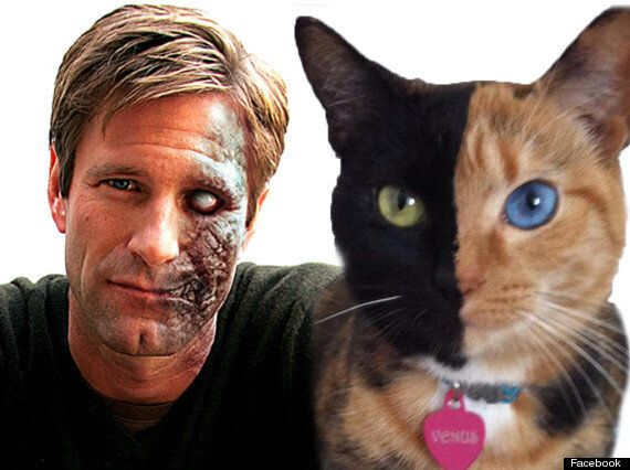 A Cat That Looks Like Batman & Another Masquerading As Two-Face: Felines Renact Comic Book