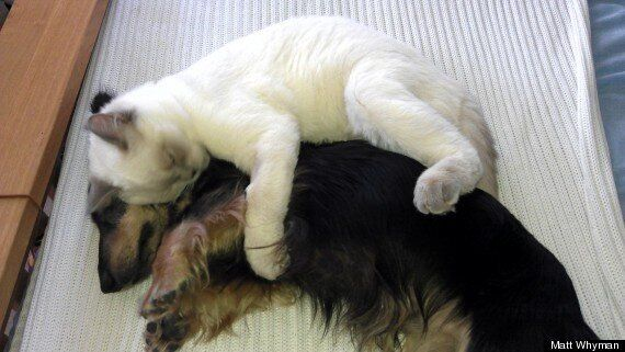 Cat Spoons Dog - The World's Cutest New Tumblr