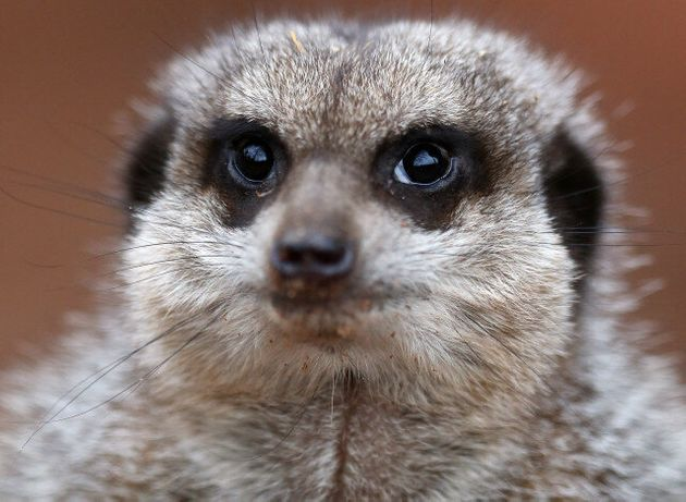 Zoo Fire At Five Sisters In West Lothian Kills Entire Reptile House, Nine Meerkats Feared