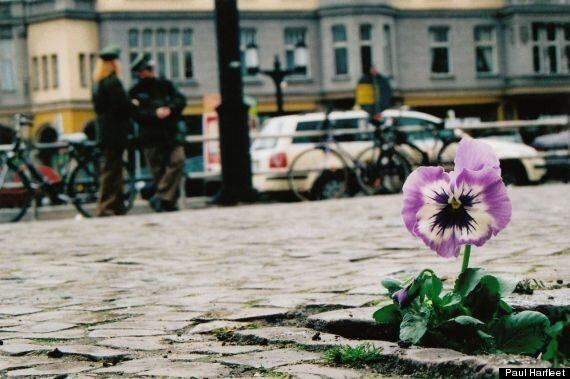 Paul Harfleet: Pansy Project Artist Plants Flowers At Site Of Homophobic Attacks