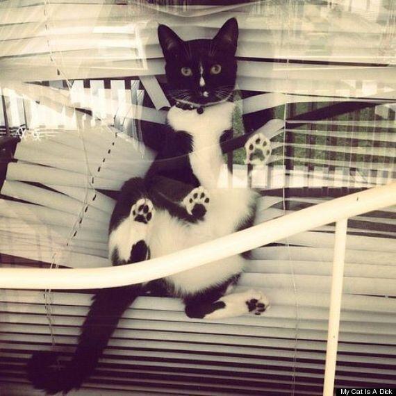 My Cat Is A Dick: Feline Shaming Website