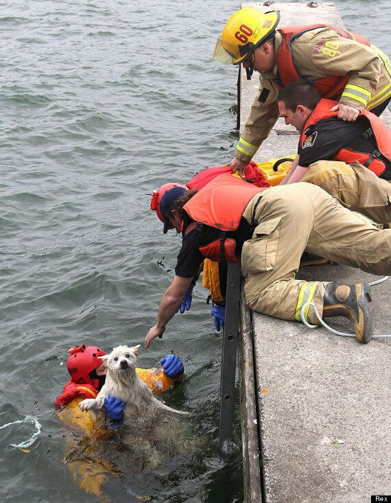 Blind Dog Rescued By Firefighters From Lake Ontario After Taking A Wrong Turn During A Pit Stop