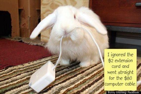 Bunny Shaming: Facebook Group Publicly Humiliates Naughty Rabbits Online