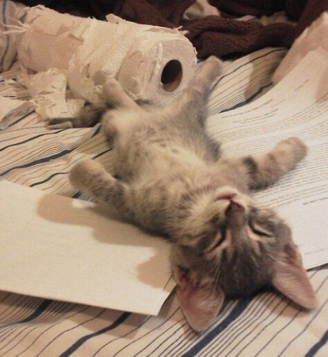 An Exhausted Kitten, Baby Owl Chick And A Mother's Emotional Letter