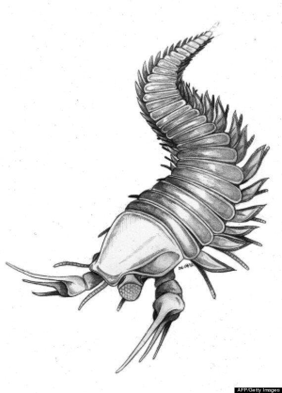 Ancient Creature Kootenichela Deppi Named After Johnny Depp's Edward