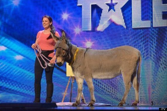 'Britain's Got Talent': Dancing Raccoon And Artistic Donkey Attempt To Excite
