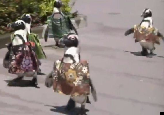 Penguins Wear African Dress To Welcome Leaders To Tokyo Conference
