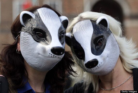 Badger Cull Begins, Campaigners Rally In London Led By Queen Guitarist Brian