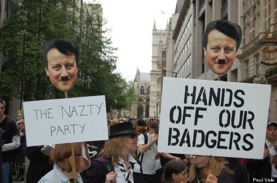 Badger Cull Protest In Westminster Led By Brian May