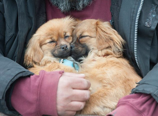 UK Dog Owners Offered 70% Discount On Cloning By S Korean 'Mammoth