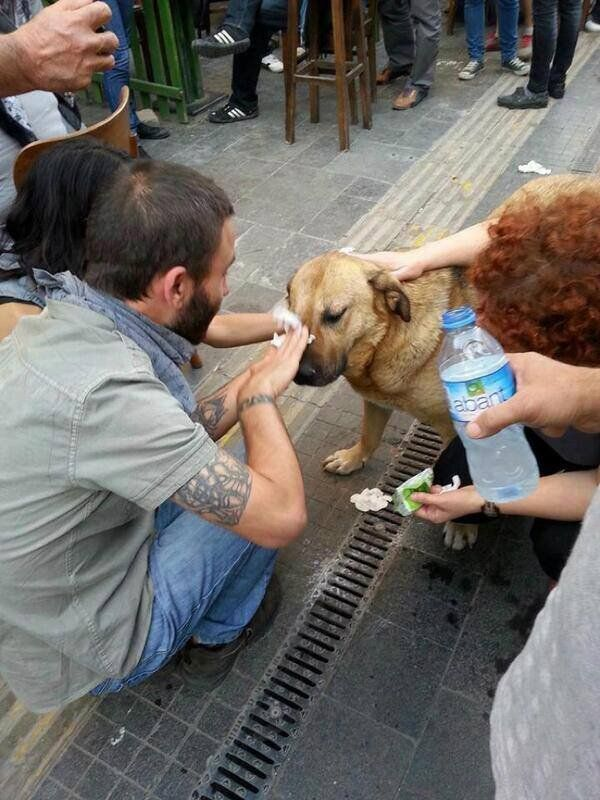 Turkey Uprising: Dogs Are Tear Gassed By Police As #OccupyGezi Protesters Help Stricken Animals