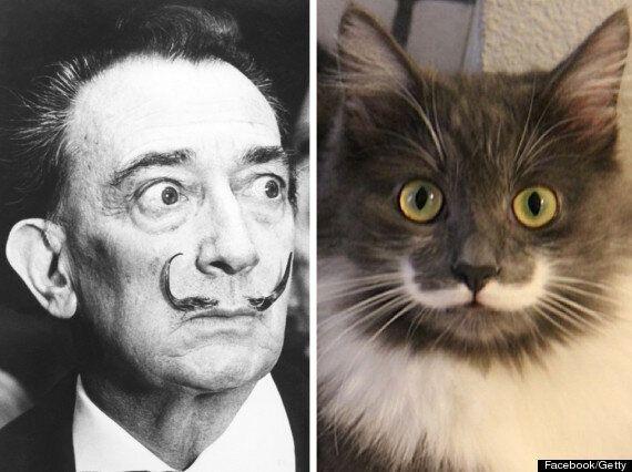 Hamilton The Hipster Cat Looks Just Like Salvador Dali (FACEBOOK