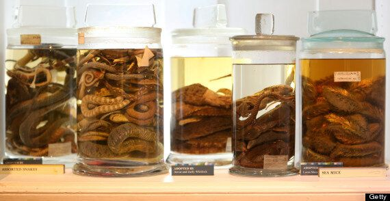 Dodos And Pickled Moles: Inside The Grant Museum
