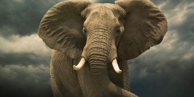 Beyond World Elephant Day: Make Your Voice Heard To Protect These Magnificent
