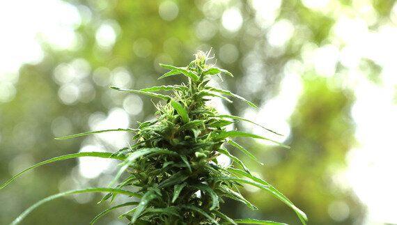 Six Reasons The UK May Soon Legalise Medical