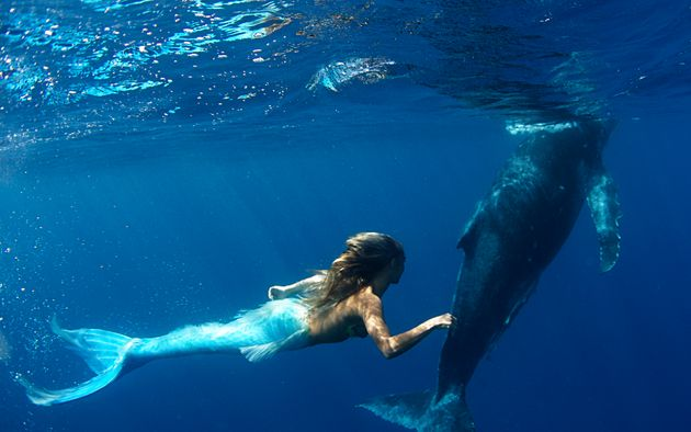 'Mermaid' Hannah Fraser Swims With Humpback Whales