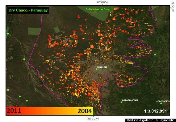 First Satellite Deforestation Tracker For Latin America Shows Tree-Felling Has Risen By