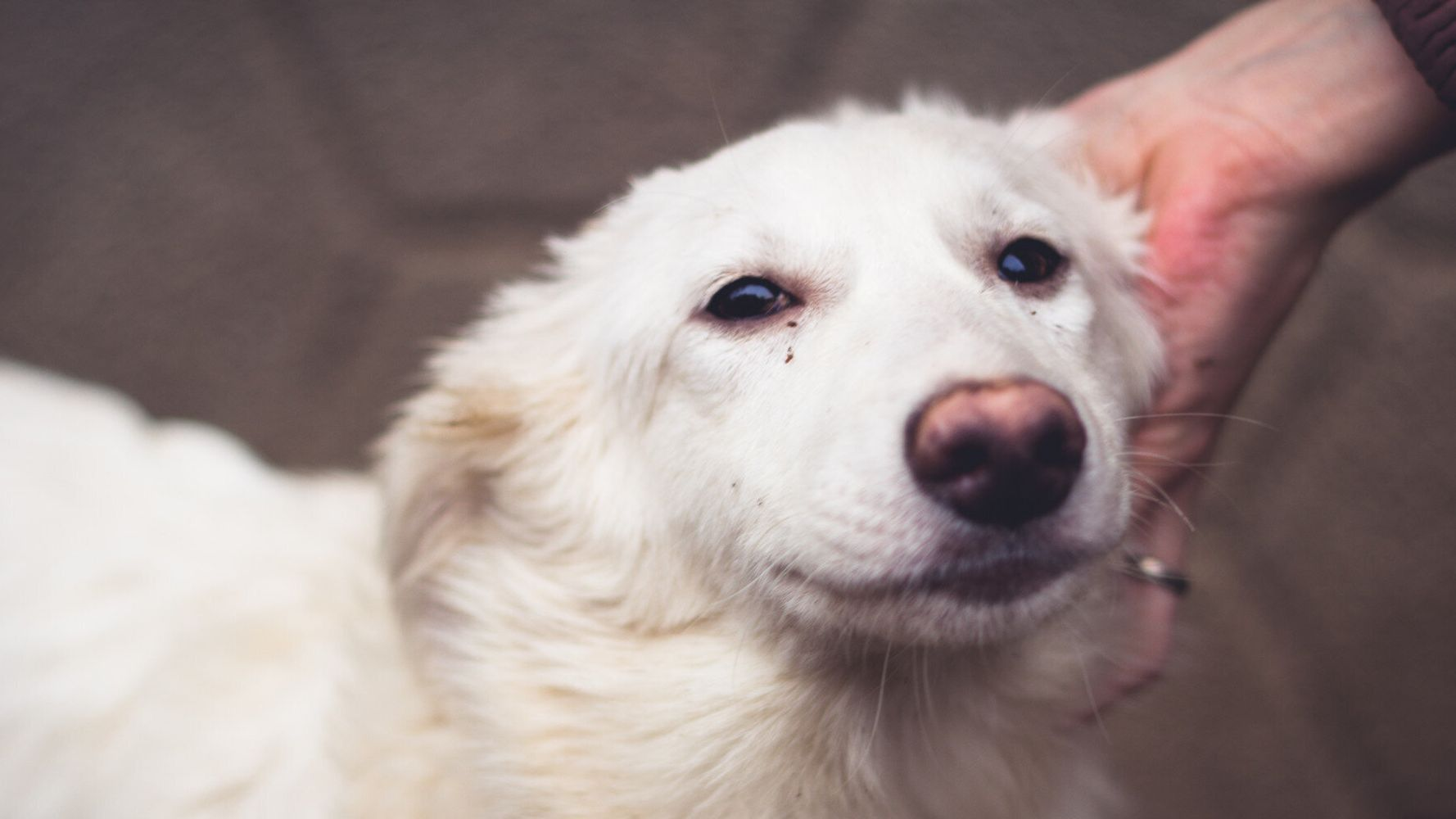 Cannabis For Dogs With Cancer | HuffPost Life
