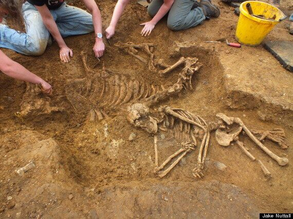 Cow And Woman Buried Together In 'Bizarre' Discovery At Anglo-Saxon Dig In
