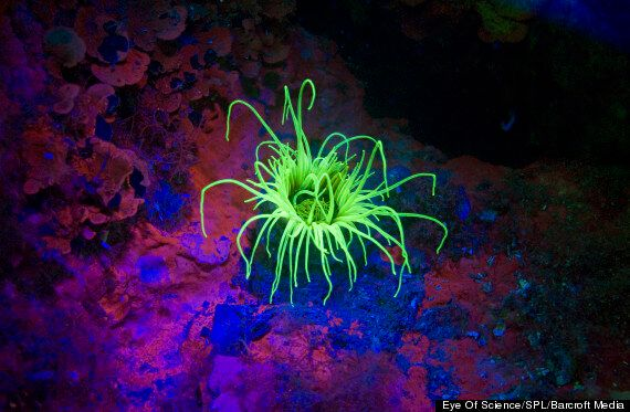 Red Sea Marine Life Becomes Neon Disco On Fluo-Dive
